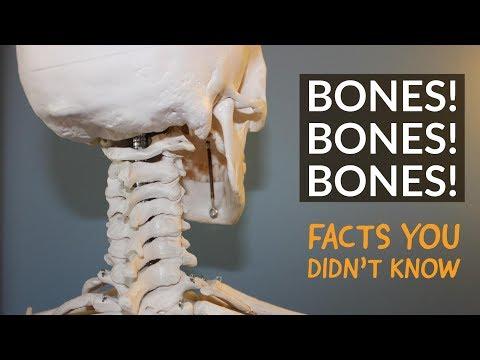 Your Skeleton and Other Curious Facts About Bones