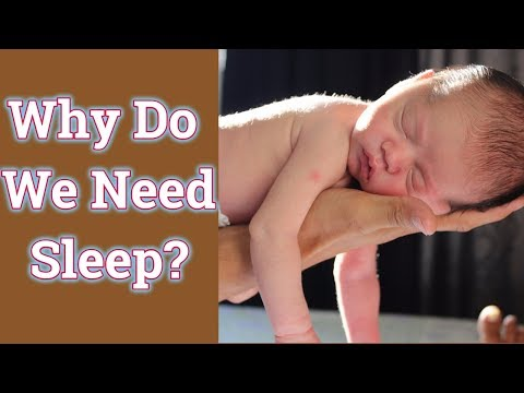 How Does Seven to Eight Hours of Sleep Affect Your Body? Why do we need sleep??