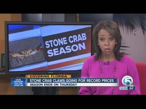 Stone crab claws hit record prices amid scarcity