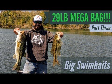 29 LB MEGA Bag!!! Big Swimbaits Land Possible RECORD Bag!!!