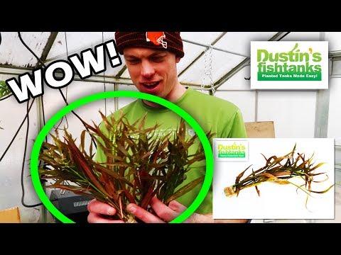 UNBOXING AQUARIUM PLANTS: Lots of New Amazing Plants!