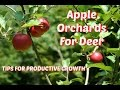 Apple Orchards For Deer - Tips for productive growth