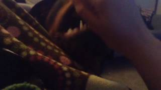 Ferocious Rottweiler attack