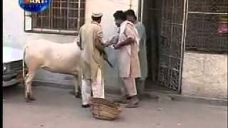 Dailymotion   Pakistani Funny Video  3    a Funny video rel page 2 rel page 2