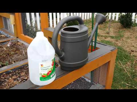 Kill weeds and grass the Vinegar way.