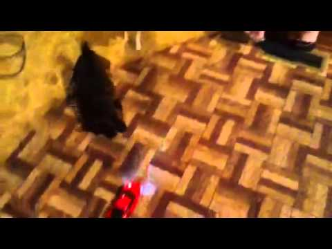 Dogs barking at toy car