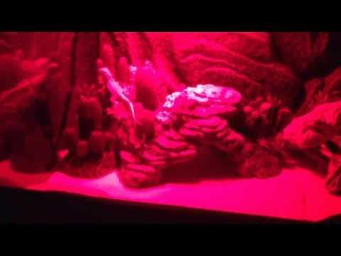 My Baby Bearded Dragon Terrarium at Night