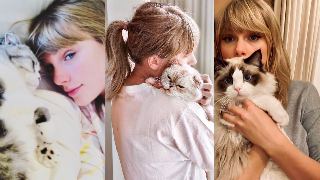 The Best of Taylor Swift and Her Cats