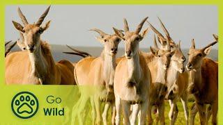 Drakensberg - Africas Dragon Mountains - The Secrets of Nature
