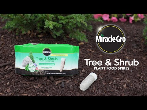 How to Use Miracle-Gro® Tree & Shrub Spikes