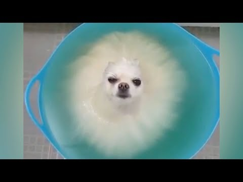 DO NOT play TRY NOT TO LAUGH, it's so HARD YOU WILL DIE TRYING! - Funniest ANIMAL videos