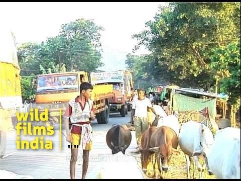 Flash floods hit Assam