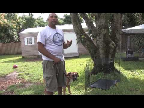 Dog Training : How to House Train an Older Dog