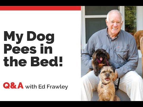 Q&A - HELP! My Dog Pees in the Bed!