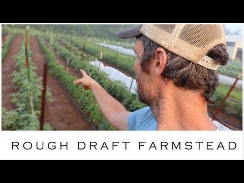 Farm and Garden Update (June Edition)