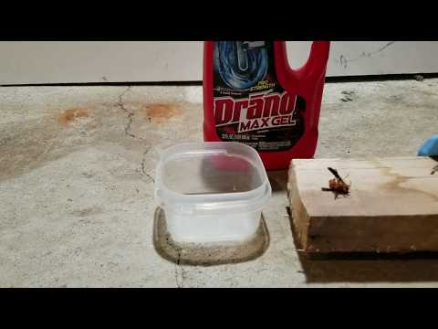 Drain Cleaner Test | Can Draino Dissolve Bugs? Watch and Find Out!