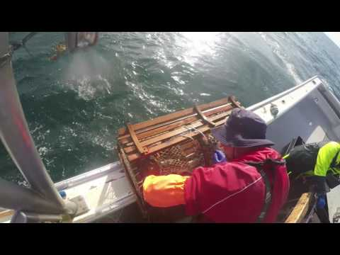 Pulling Lobster Traps