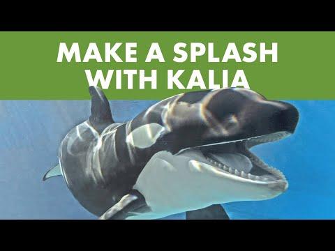 Meet Kalia   SeaWorld®