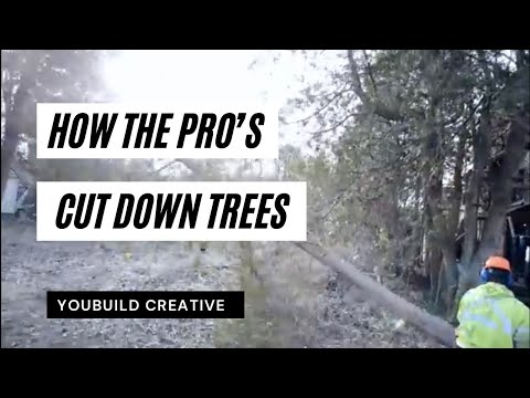 How Pro's Cut Down Trees