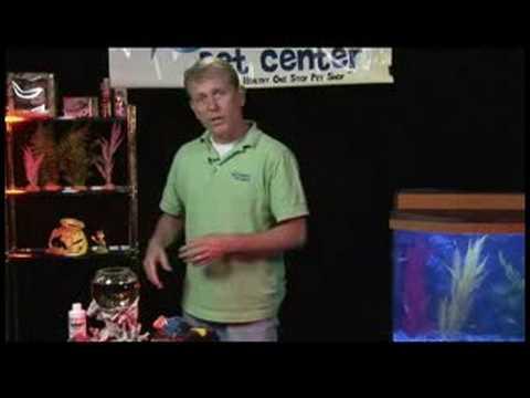 Fish & Aquarium Care : How to Treat a Sick Betta Fish