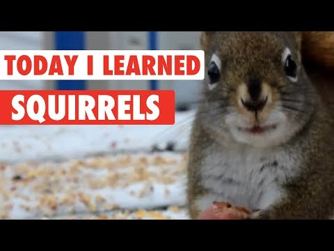 Today I Learned: Squirrels