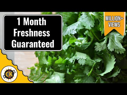 Cilantro Saving Tip. How to keep Coriander Fresh for long in Fridge by Chawla's Kitchen