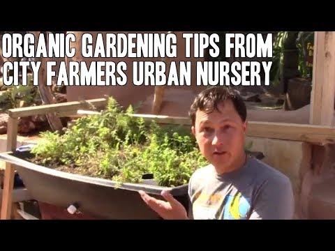 Organic Gardening Tips from City Farmers Urban Nursery