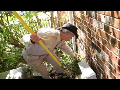 Home Maintenance Tips to Bug-Proof Your Home