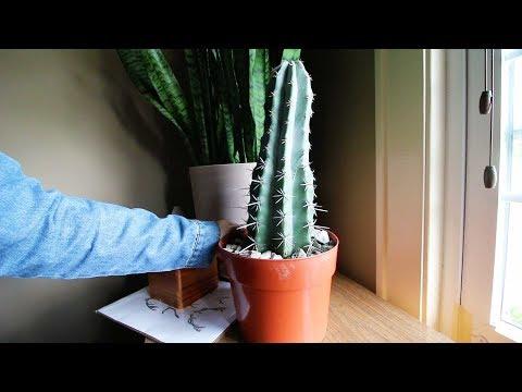 Propagation Part 3: Succulent Plant Tour(watch part 1&2)