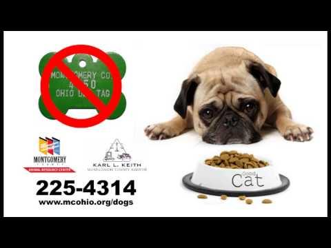 2016 Dog License Commercial 2