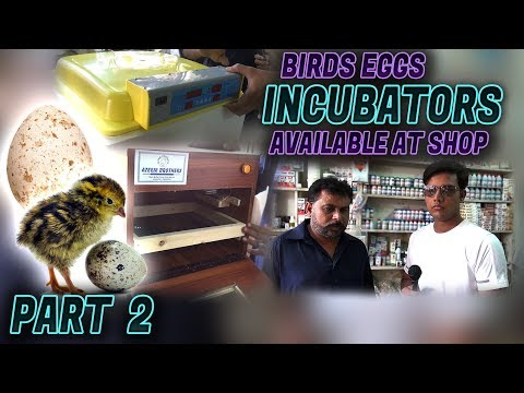Birds Eggs Incubators Available at Nazimabad Shop Jamshed Asmi Informative Channel In (Urdu/Hindi)