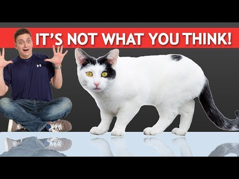 Can You Train Cats? We'll Find Out! It's not what you think!