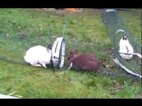 Bunnies in a home made bunny run