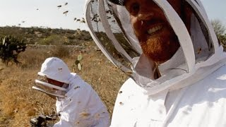 Download A Film Crew Unleashes 40,000 Killer Bees on Itself Video