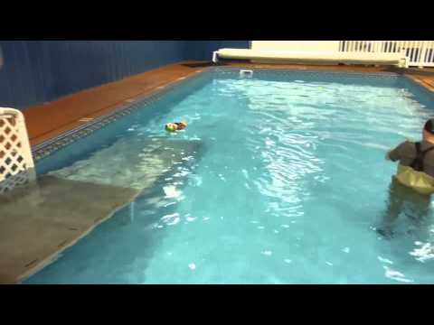 Dog Breeds Not Naturally Thought of as Swimmers swimming at Alaska K9 Aquatics