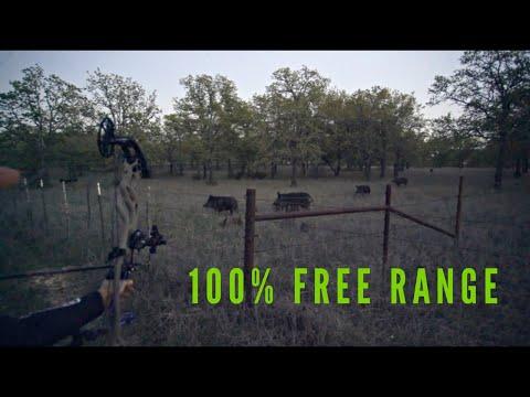 Sarah Shoots Free Range Texas Hog W/ Her Bow   Bowmar Bowhunting  