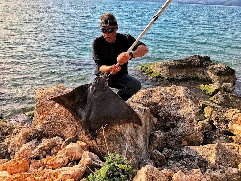Fishing Stingray  & Cleaning  30-40lb