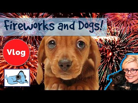 How to Help Scared Dogs Cope with Fireworks! Calm Down Your Dog During Firework Displays.
