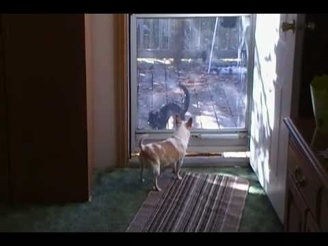 Dog barking at fake cat
