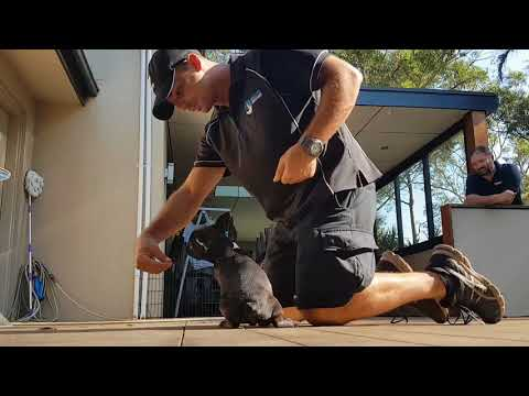 How to introduce the Sit and Down command to your pup
