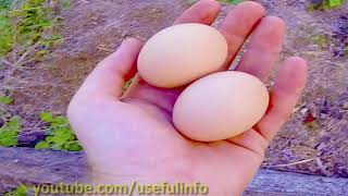 Bury An Egg In Your Garden Soil, What Happens Few Days Later Will Surprise You | Useful info