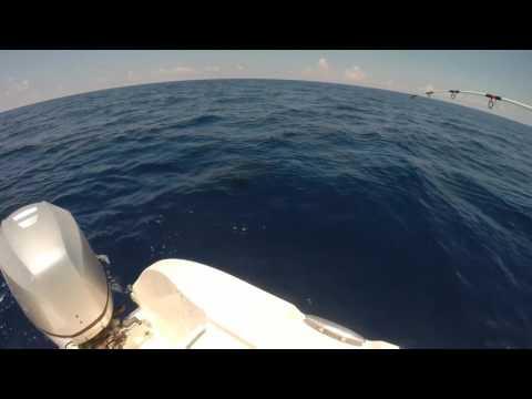 Marathon Sailfish