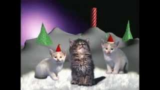 Katten die kerstliedjes zingen