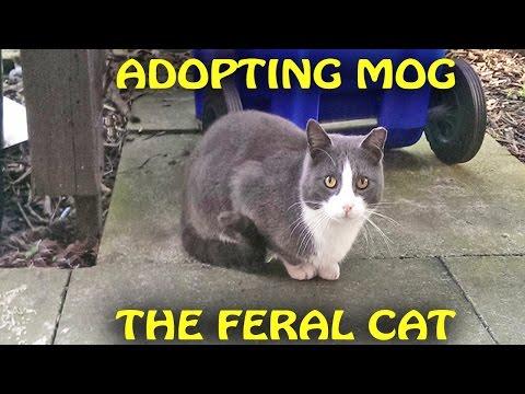Adopting Mog the Feral Cat