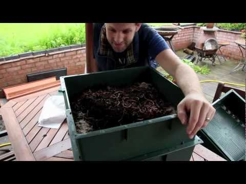 Wormcity Wormery Review - My composting little friends