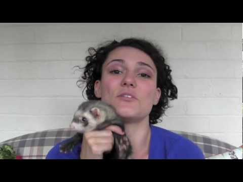 How to reduce ferret smell - www.Ferret-World.com