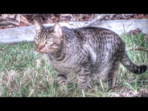 Feral Cat Documentary
