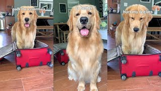 My Dog Packs My Bags