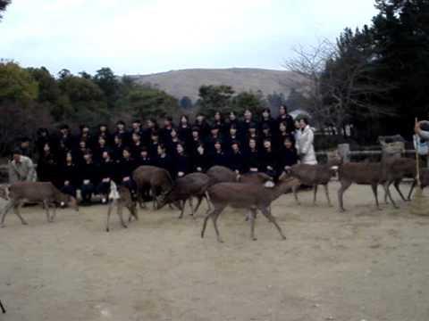 Japanese School girls get class picture taken with native deer.