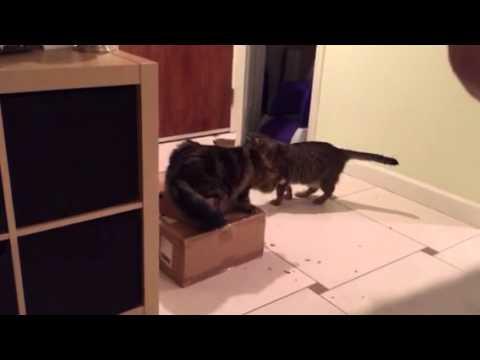 He eats a box!